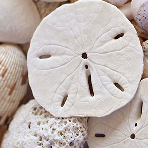 IBH program card image of sand dollar and shells