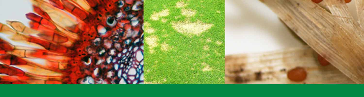 Turfgrass pathology header - images of turf pathogens