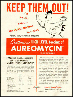 Magazine ad promoting Auromycin in chicken feed