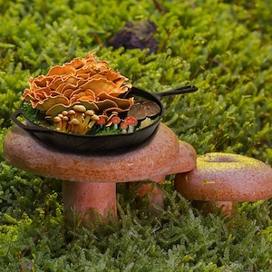Skillet filled with edible mushrooms