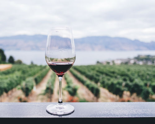 Glass of red wine with vineyard in background