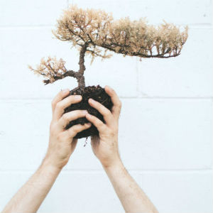 hands holding up withered plant