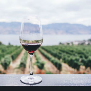 Glass of red wine with vineyards in background