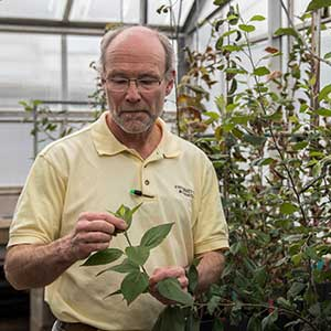 Professor James Luby inspects a young plant in the greenhouse