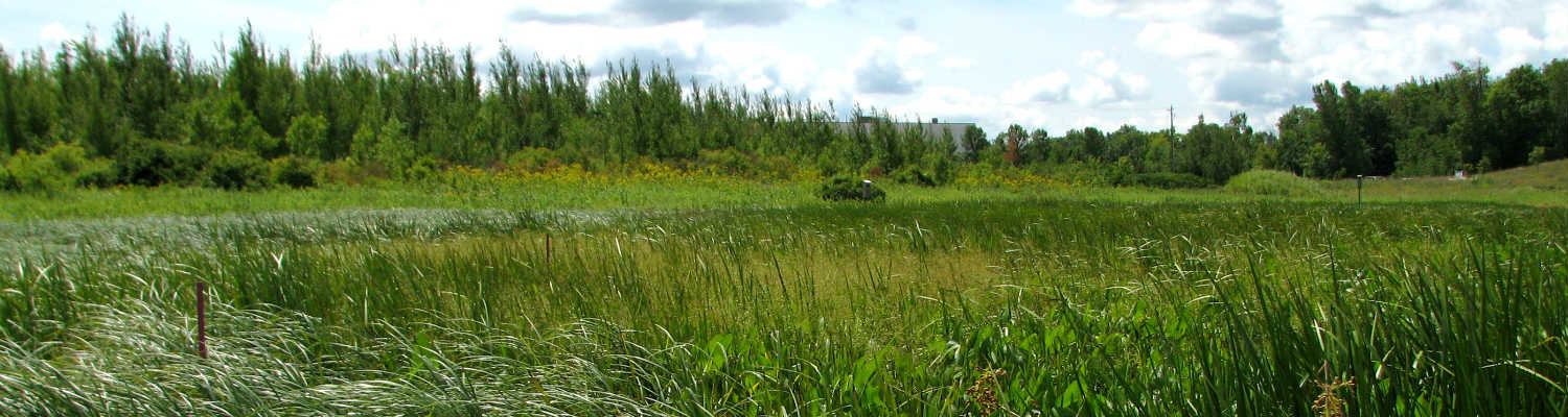 Ecological Restoration header image - green field, trees and cloudy sky